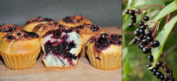 muffins di sambuco