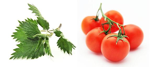 Due alleati del gusto: selvatica decisa e stimolatore dell'umami...il 5° gusto