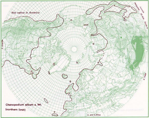 Distribuzione di Chenopodium album (fonte: http://linnaeus.nrm.se/flora/di/chenopodia/cheno/chenalb.html)